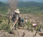 Người dân đang trồng rừng