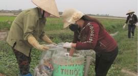 Ruộng đồng sạch sẽ, an toàn không còn chai lọ thuốc trừ sâu.