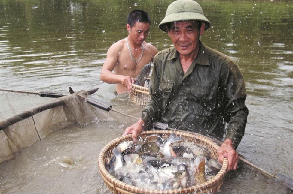 Mô hình nuôi lợn bản của gia đình anh Nguyễn Thành Lương xã Hóa Hợp, huyện Minh Hóa.
