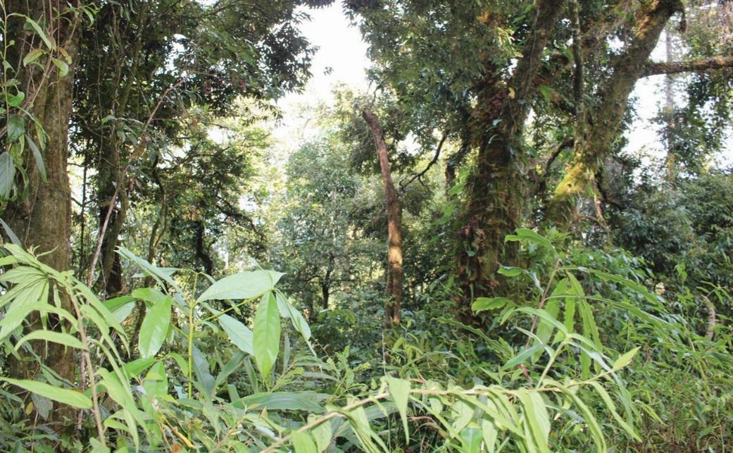 Khu bảo tồn thiên nhiên Mường Nhé.