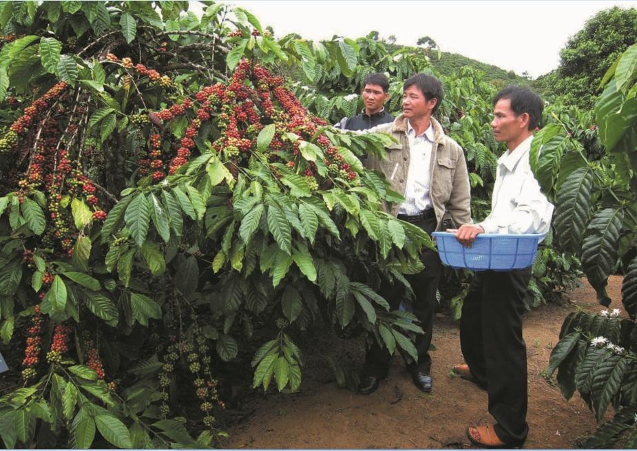 Sử dụng các chế phẩm sinh học, phân bón hữu cơ vi sinh góp phần nâng cao chất lượng cây trồng và bảo vệ môi trường. (Ảnh MH).