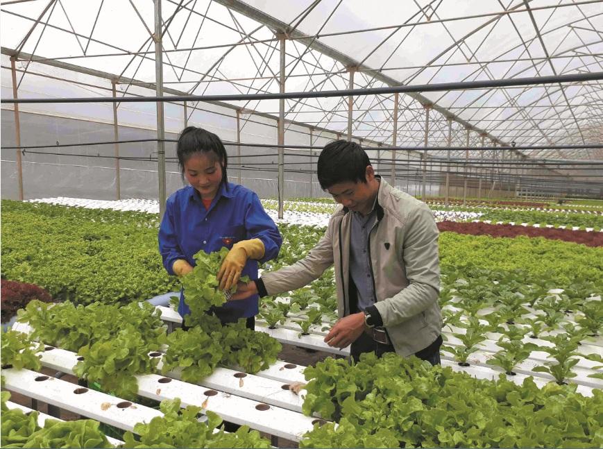 Phát triển nông nghiệp công nghệ cao là hướng đi vững chắc, đem lại sự bền vững trong sản xuất nông nghiệp.