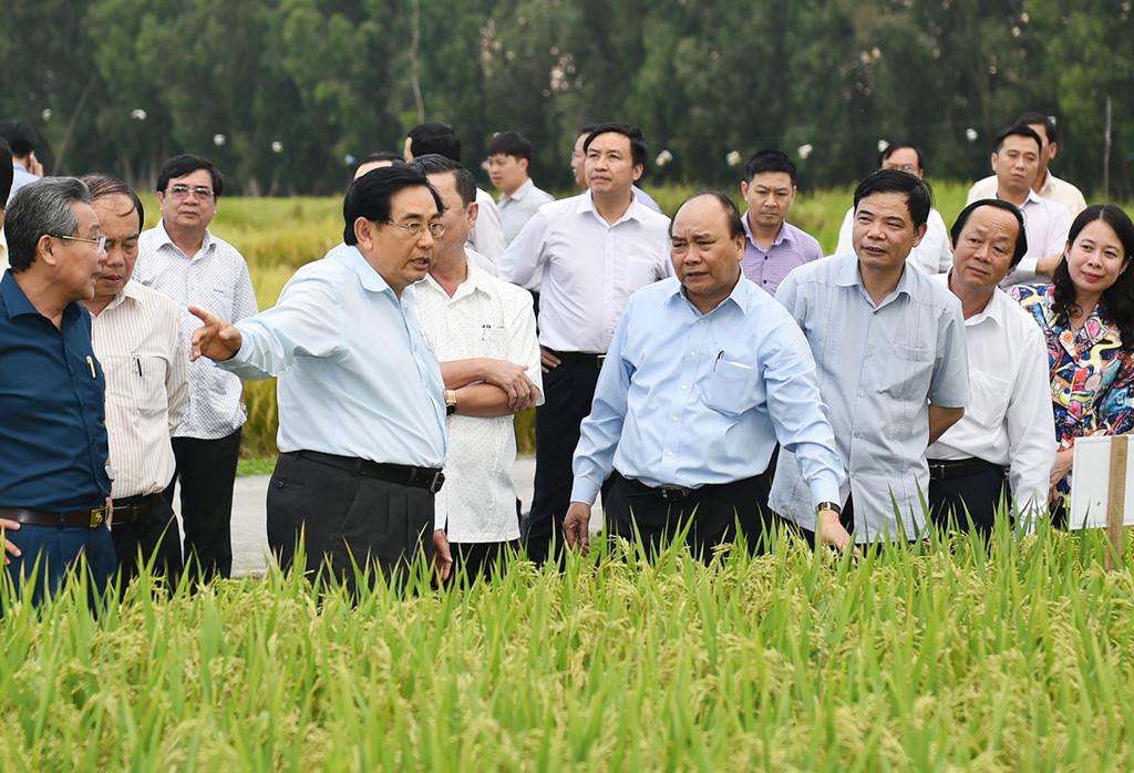 Thủ tướng Nguyễn Xuân Phúc thăm các cánh đồng mẫu, trồng các giống lúa mới của một trung tâm nghiên cứu nông nghiệp tại An Giang, ngày 14/3/2017