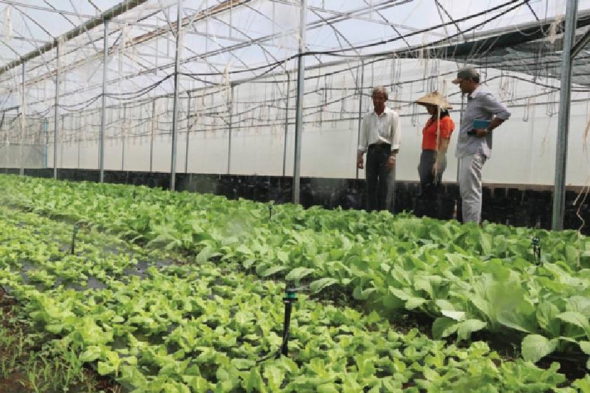 """Nông dân huyện Lộc Ninh, tỉnh Bình Phước đang chăm sóc rau trồng theo hướng """"sạch"""" để cung ứng thị trường Tết."""