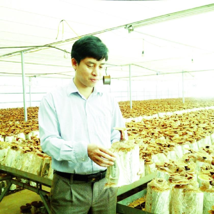 Kỹ sư Trần Đình Thắng giới thiệu về nấm linh chi.