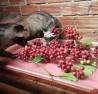 Những chú chồn trong trang trại của anh Cừ đang ăn trái cà phê.