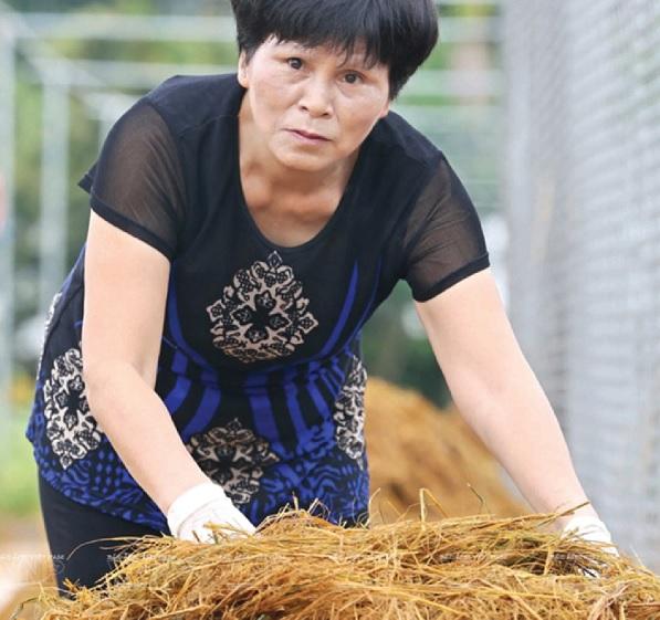 PGS.TS Tăng Thị Chính tại Nhà máy chế biến phân hữu cơ từ rác thải (Cẩm Xuyên, Hà Tĩnh).