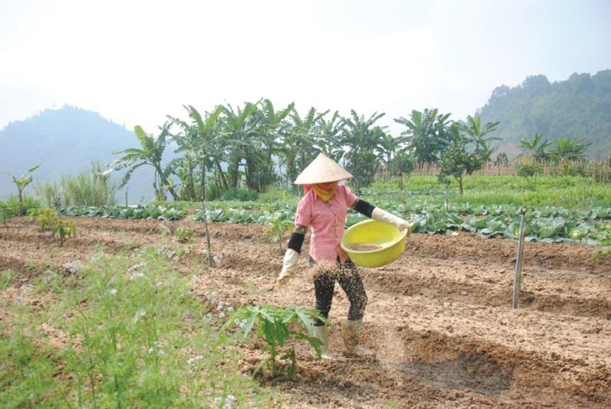 Chất thải trong chăn nuôi được ủ mục phục vụ cho trồng trọt. Ảnh: MH