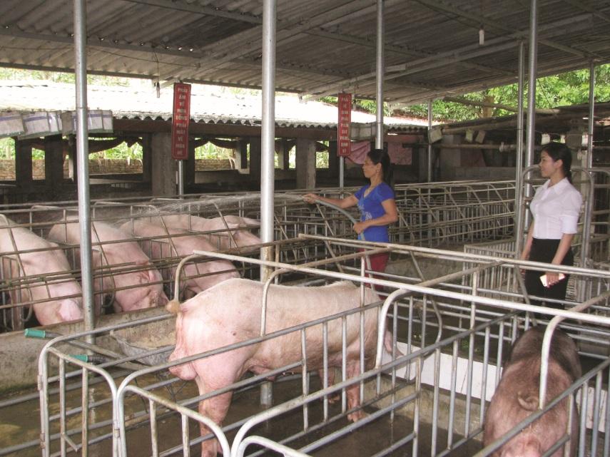 Với sự giúp đỡ của các cấp Hội Phụ nữ, nhiều chị em phụ nữ ở Phù Yên đã thoát nghèo.