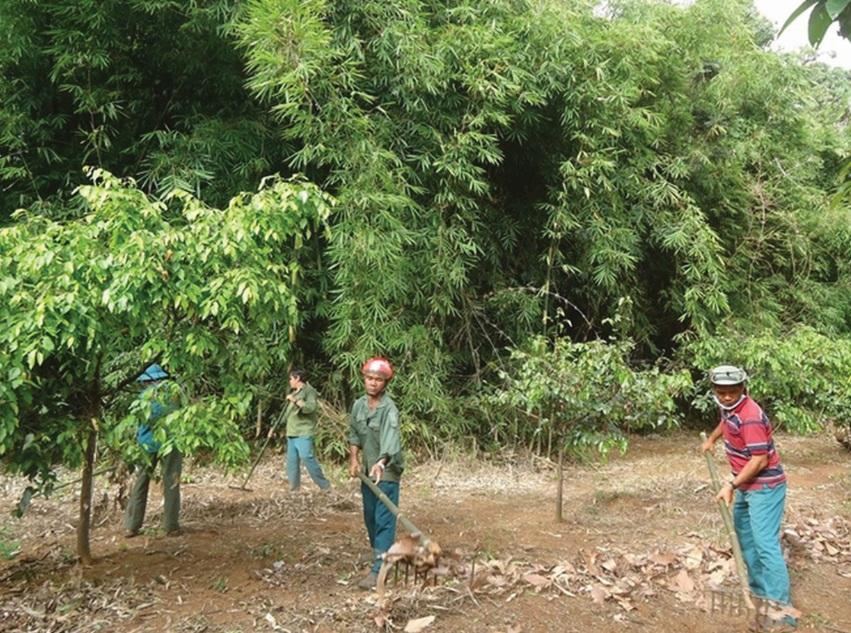 Khoán nhận rừng vừa bảo vệ rừng bền vững, vừa tạo thêm thu nhập cho người dân.