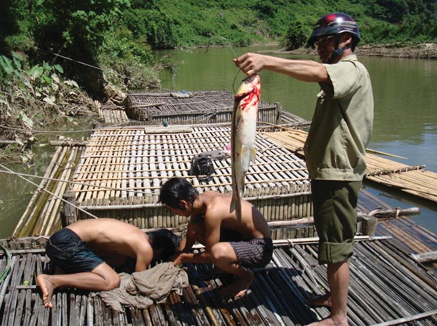 Mô hình nuôi cá lồng mang lại hiệu quả nhưng khó nhân rộng vì thiếu vốn đầu tư.