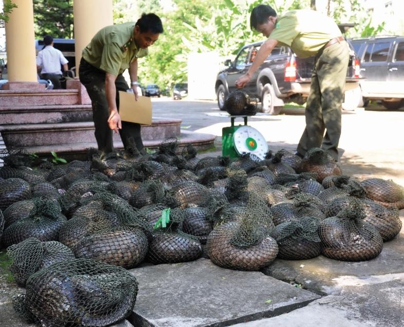 Nhiều cá thể tê tê buôn bán trái phép bị bắt giữ.
