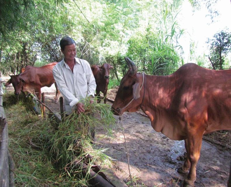 Nhiều hộ thoát nghèo từ việc được hỗ trợ một vài con bò sinh sản. (Ảnh minh họa)