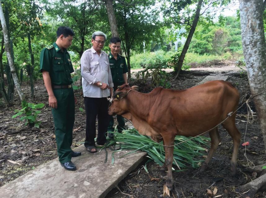 Ông Nguyễn Thành Tâm bên con bò giống sinh sản do Đồn Biên phòng An Thạnh Ba trao tặng.