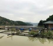 Mô hình bè lồng nuôi cá của hộ vay vốn Lý Văn Thân ở xóm Lau Bai,  xã Vầy Nưa, huyện Đà Bắc.