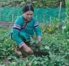 Sự tin tưởng của bà con dân tộc Phù Lá là động lực lớn nhất để chị Sùng Phà Sủi gắn bó với công việc.