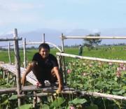 Anh Quảng Ngọc Nhiên làm thành công mô hình trồng sen kết hợp với du lịch.