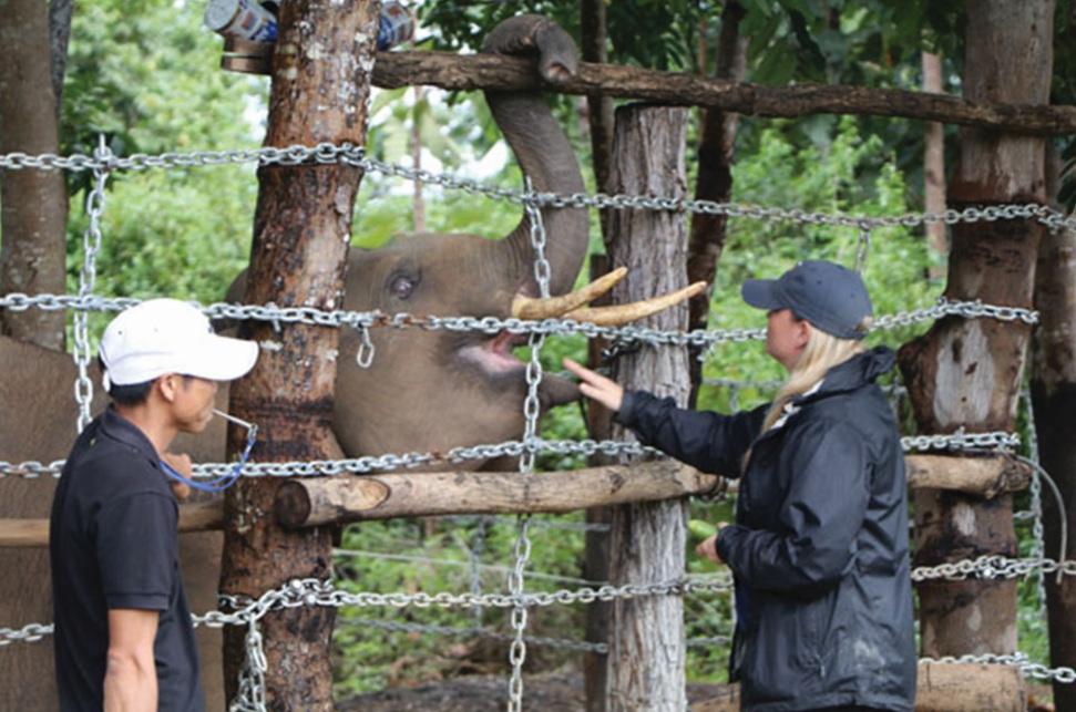 Chuyên gia nước ngoài đang hướng dẫn nhân viên Trung tâm Bảo tồn voi điều khiển hành vi của voi.