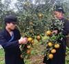 Nông sản lúc được mùa, lúc thất bát, nhưng người nông dân gắn bó tâm huyết sẽ cho trái ngọt.