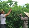 Chuyển đổi cây trồng