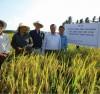 Liên kết sản xuất lúa giống
