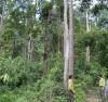 dịch vụ môi trường rừng