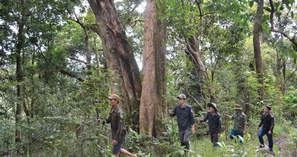quản lý bảo vệ rừng