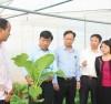 Ông Dương Văn Thái, Phó Chủ tịch tỉnh Bắc Giang (từ trái sang đứng thứ 2) thăm mô hình trồng rau trong nhà màng.