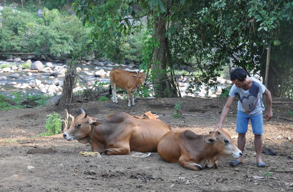 Nỗ lực thoát nghèo đang trở thành phong trào lan tỏa trên nhiều bản làng Nam Trà My. Ảnh: Thanh Huyền