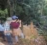 Công tác quản lý bảo vệ rừng ở Bình Định