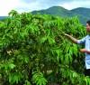 Chính sách dịch vụ môi trường rừng
