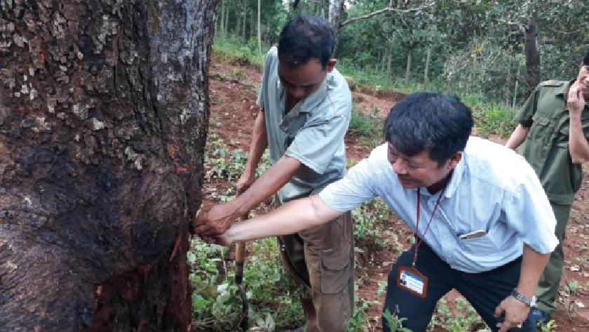 Phó Chủ tịch UBND xã Phú Văn, Lê Đào Thanh Hải thăm và tìm hiểu tình trạng sâu đục thân tại vườn điều ông Điểu Lơn.
