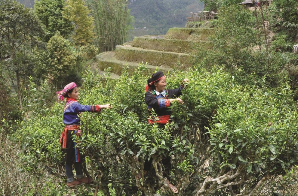 Doanh nhân Phạm Văn Thuyền (người đứng) đang cùng công nhân làm việc tại công trường.