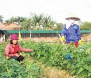 Sản xuất nông nghiệp