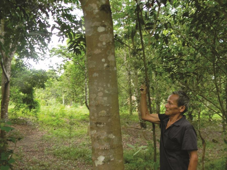Rừng lim của ông Trương Quốc Đô ở xã Tân Hóa được xem là mô hình điểm về trồng rừng bằng cây bản địa.