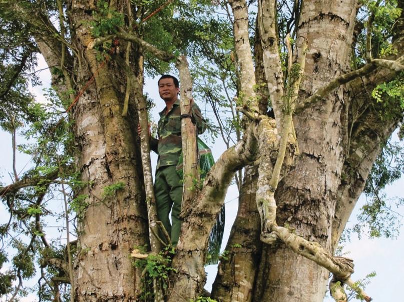 Người dân phải mắc võng ngủ trên cây để canh trộm.