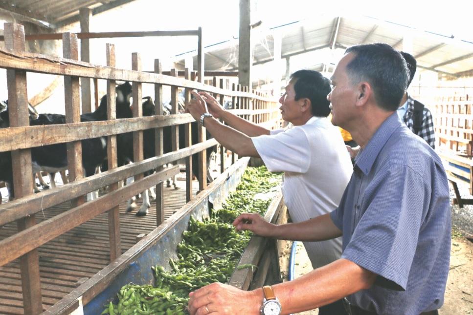 Nhiều hộ nông dân ở huyện Châu Thành, An Giang tận dụng phụ phẩm vỏ đậu nành để nuôi dê.