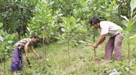giấy chứng nhận quyền sử dụng đất lâm nghiệp