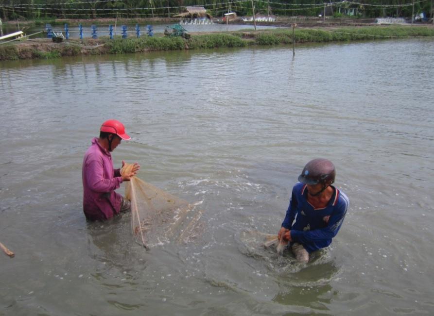 Hộ nông dân Đào Từ ở ấp 6 (xã Khánh Hoà) nuôi tôm sú, cho thu nhập từ 180–200 triệu đồng/năm.
