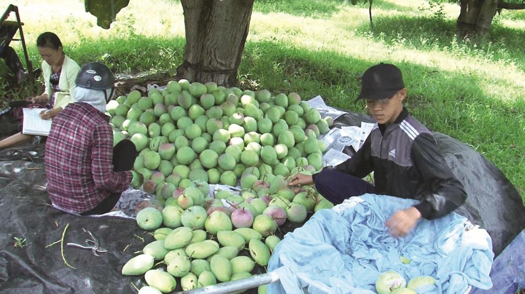 Khánh Hòa:  Phát triển thương hiệu để nâng cao giá trị sản phẩm