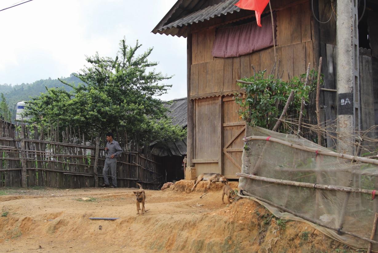 Tiềm ẩn nguy cơ bệnh dại do tập quán thả rông súc vật của người dân miền núi.