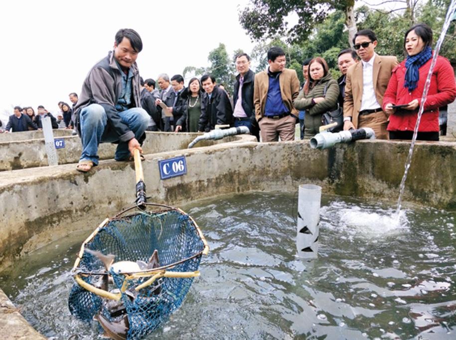 Công nhân đang thu hoạch cá hồi vân tại trang trại anh Nguyễn Thế Hải ở xã Bản Khoang, huyện Sa Pa (Lào Cai).