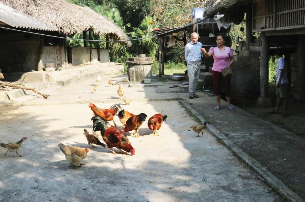 Chị Hoàng Thị Giang phải tận dụng phần đất ở còn lại để cấy lúa và nuôi gà.