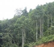 Nguyễn Xuân Oanh