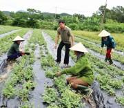 Nilon dùng trong nông nghiệp