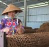 Nông dân tiêu biểu Nghiêm Đại Thuận