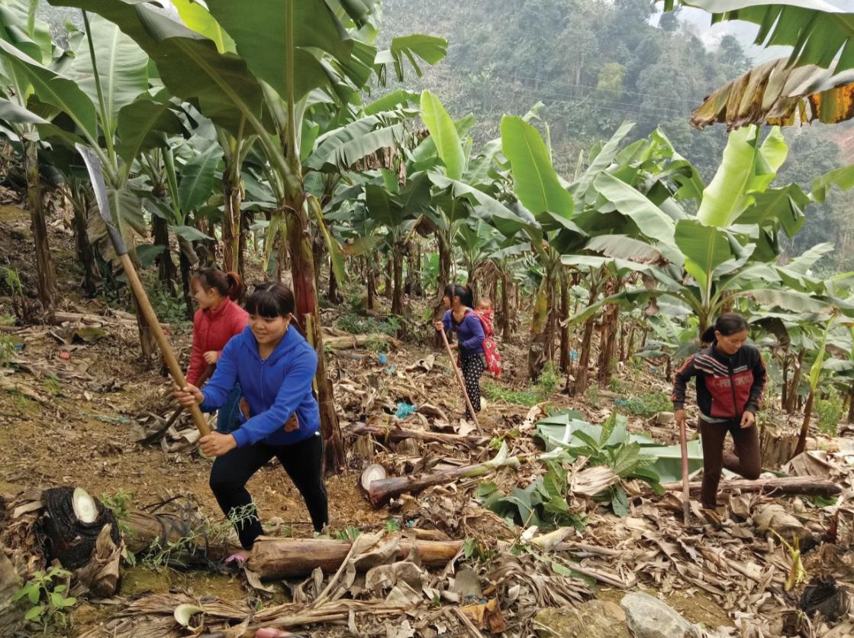 Hiện nay, trên địa bàn tỉnh Lào Cai vẫn còn một số lượng lớn người lao động DTTS chưa có việc làm và thu nhập ổn định.