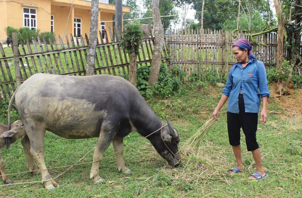 Bà Lữ Xuân Việt, thoát nghèo nhờ nguồn vốn hỗ trợ Chương trình 30a.