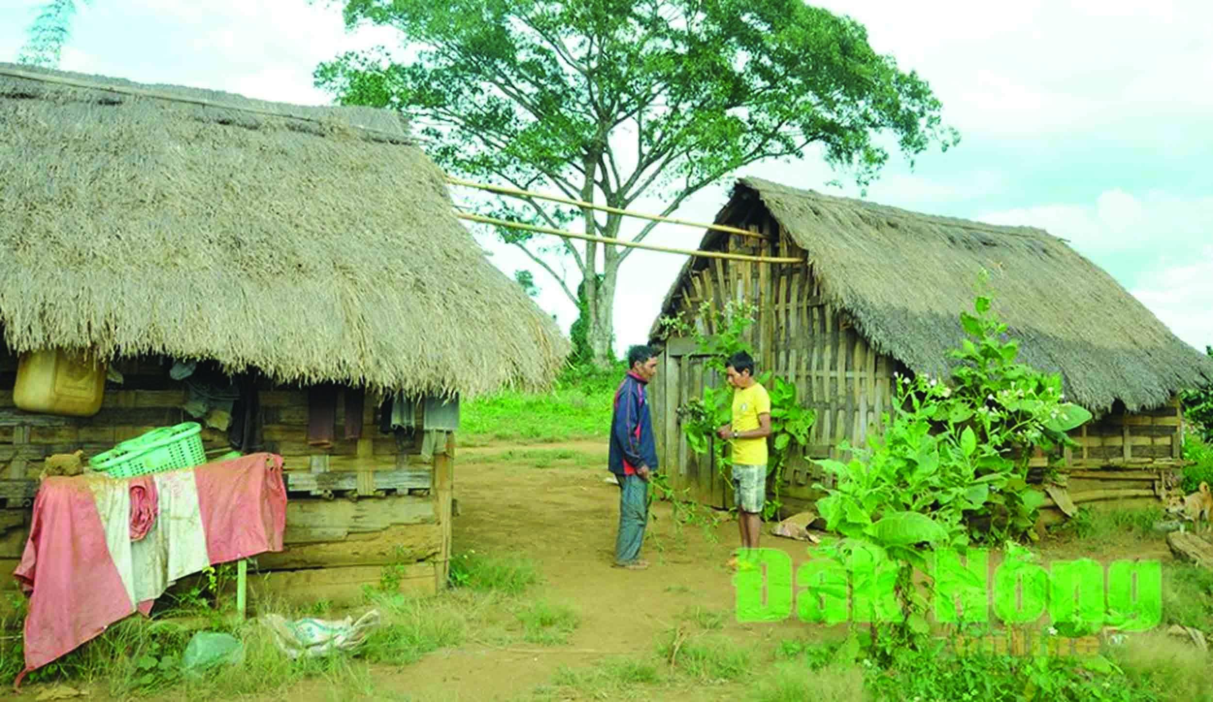 Nhà ở tạm bợ khiến đồng bào DTTS khó thoát nghèo. (Trong ảnh: Nhiều hộ dân ở thôn 9, xã Đăk Ha, Đăk Glong, Đăk Nông vẫn đang sống trong những ngôi nhà tranh tre tạm bợ).