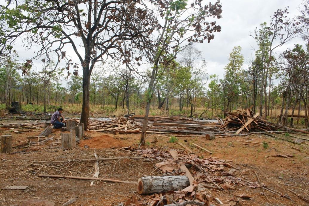 Nhiều cánh rừng ở Đăk Nông bị chặt hạ không thương tiếc.